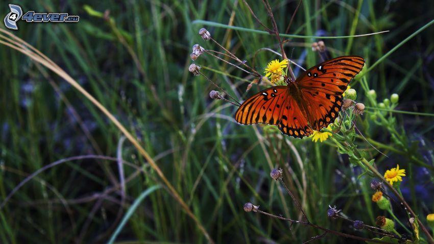 Schmetterling, Feldblumen