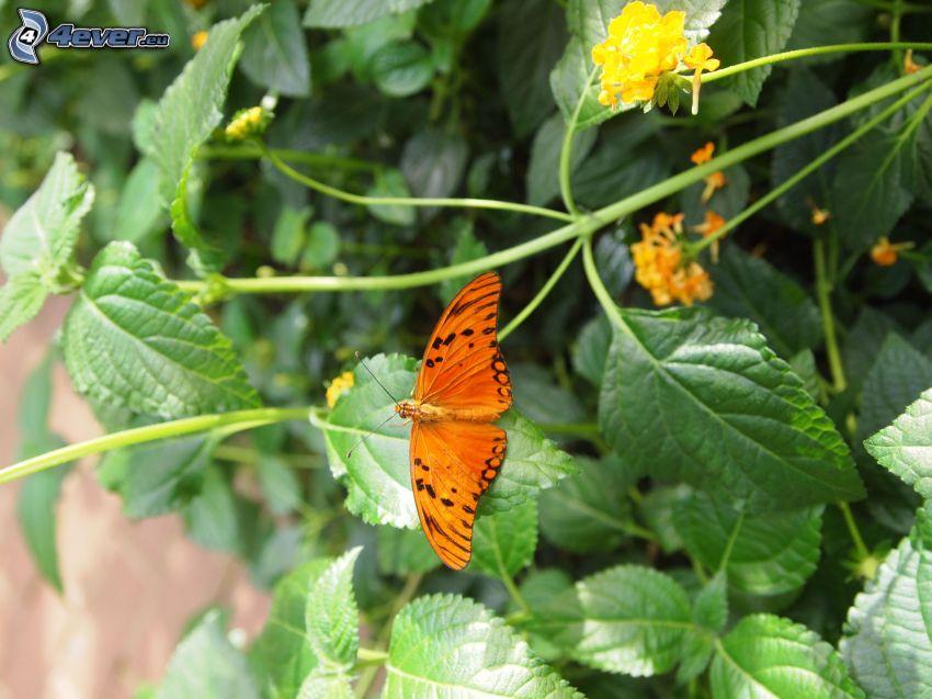 Schmetterling, gelbe Blumen