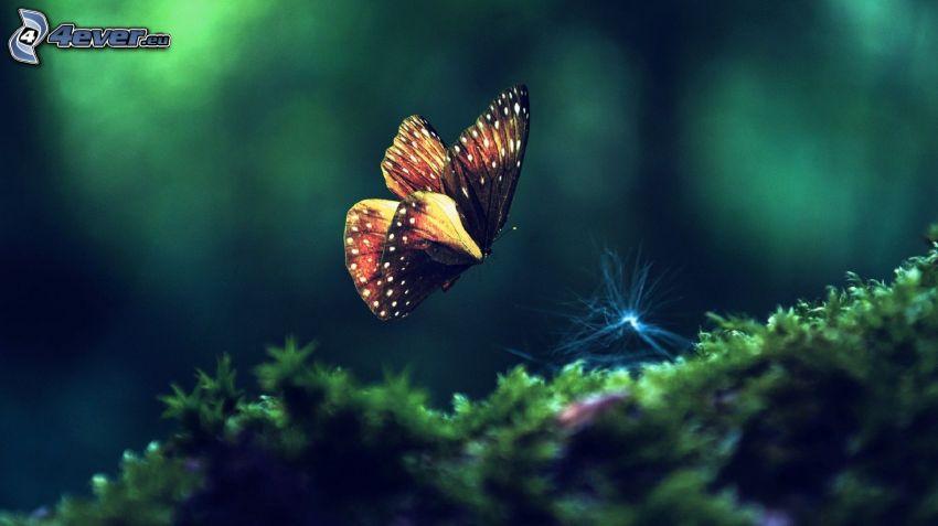 Schmetterling, Moos