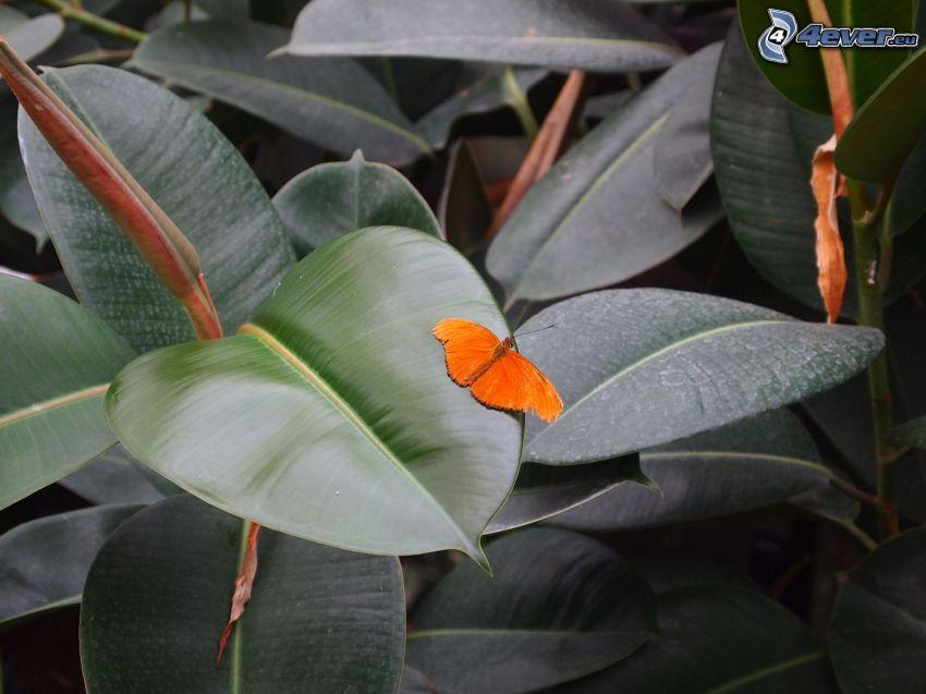 Schmetterling, Pflanze