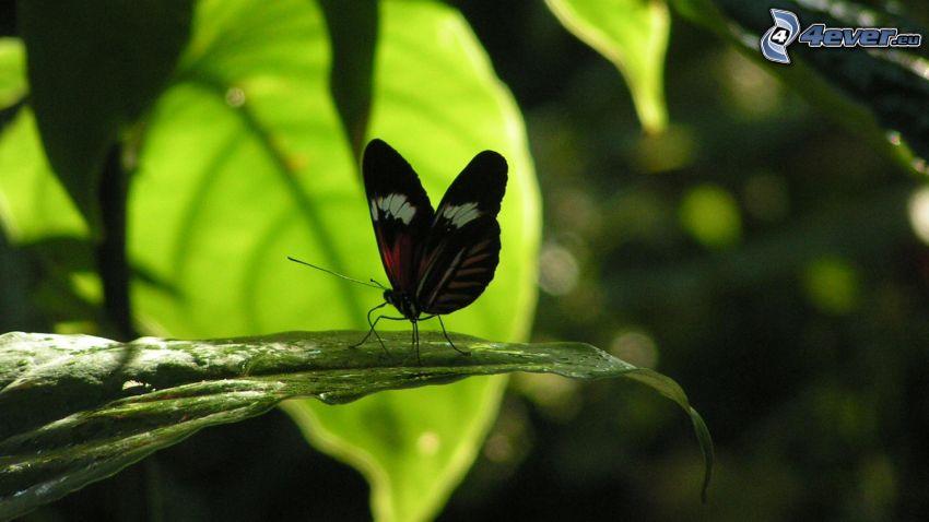 Schmetterling auf Blättern