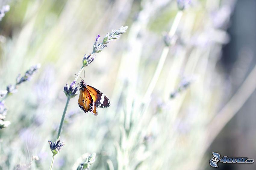Schmetterling auf der Blume, Pflanzen