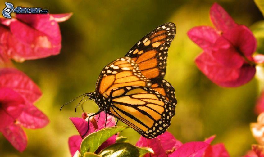 Schmetterling auf der Blume, rosa Blumen