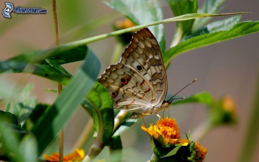 Schmetterling auf der Blume