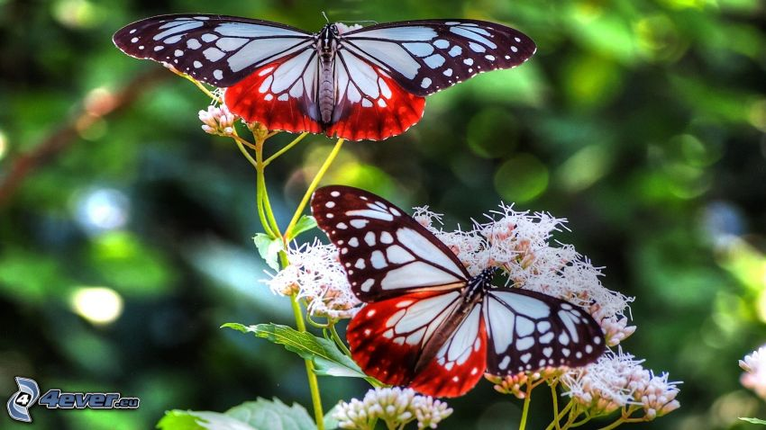 Schmetterlingen
