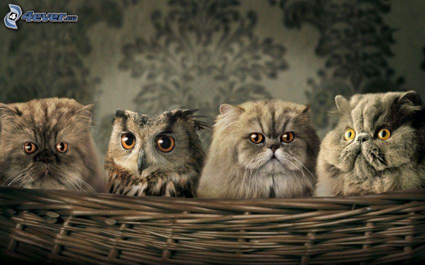 Kätzchen, Eule