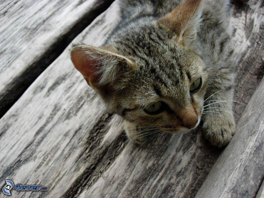 Katze, Holz