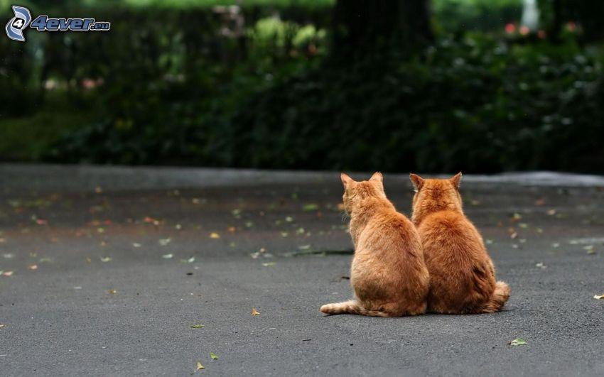 Katzen, Gehweg