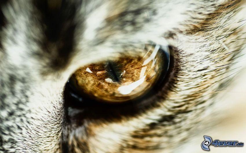 Auge, Katzenaugen