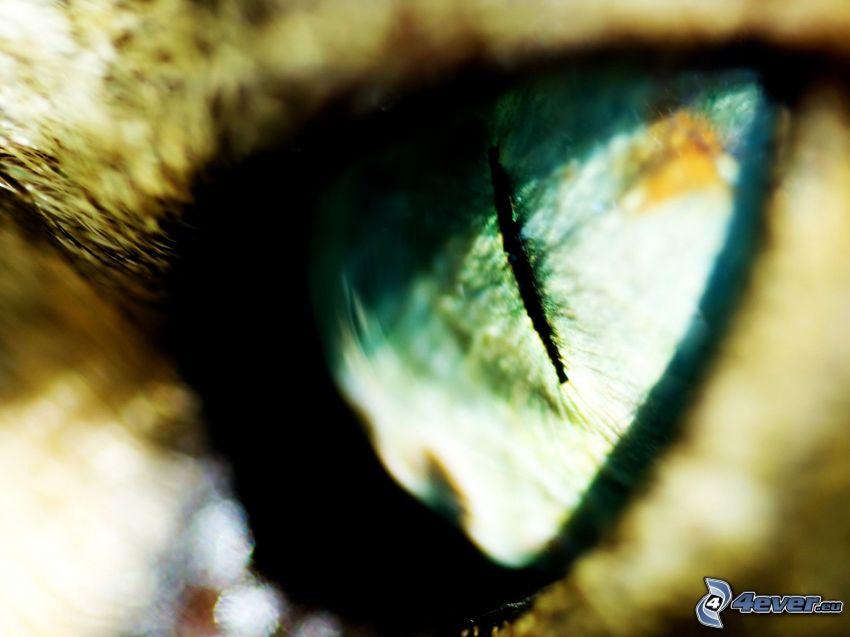 Auge der Bestie, Katze