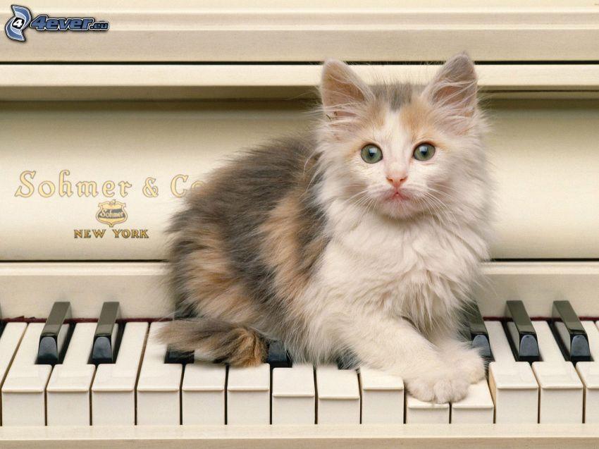 Behaarte Kätzchen, Klavier