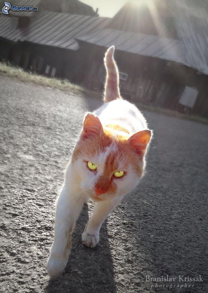 Blick der Katze, gescheckte Katze, Hütte, Straße