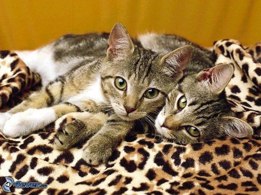 braune Kätzchen, Leoparden-Muster
