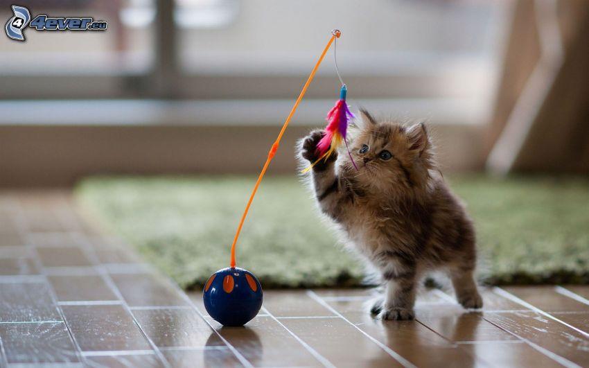 braune Kätzchen, Spielzeug