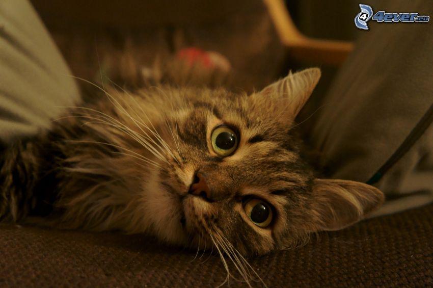 braune Kätzchen