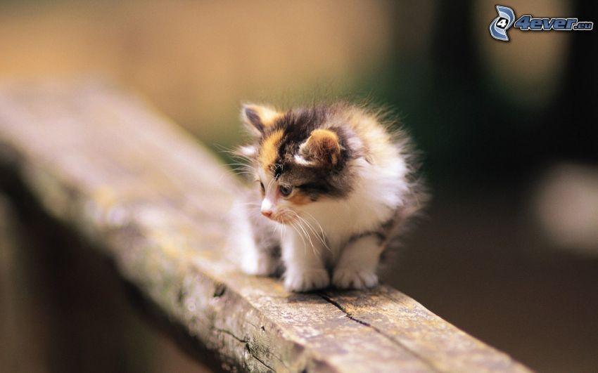 gefleckt Kätzchen, Katze auf Zaun
