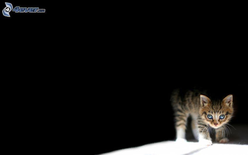 gefleckt Kätzchen