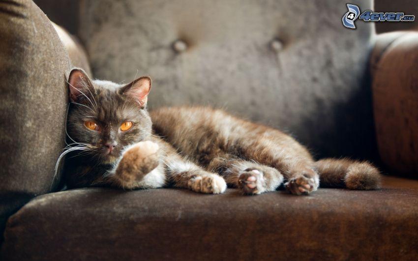 gescheckte Katze, Couch