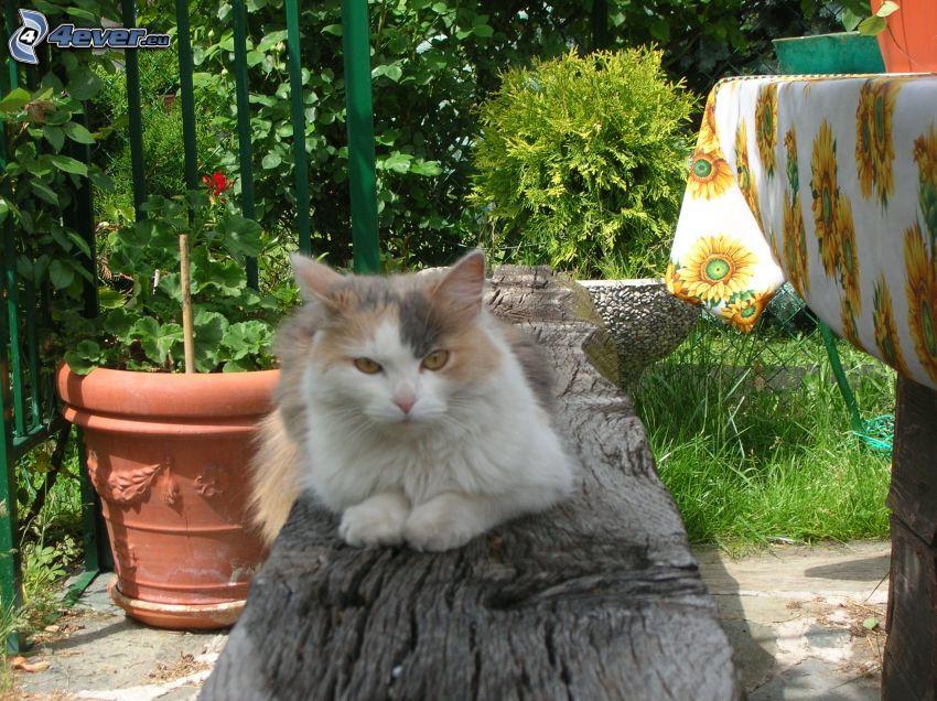 gescheckte Katze, Garten