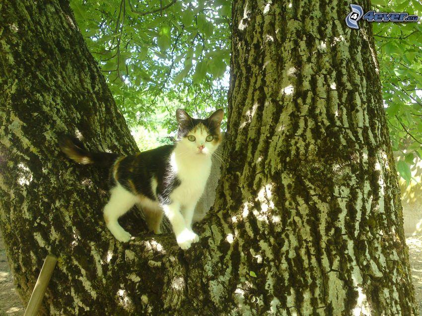 gescheckte Katze, Katze auf einem Baum