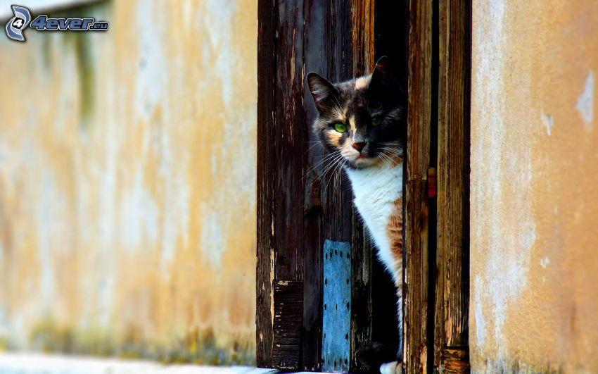 gescheckte Katze, Tür, Blick