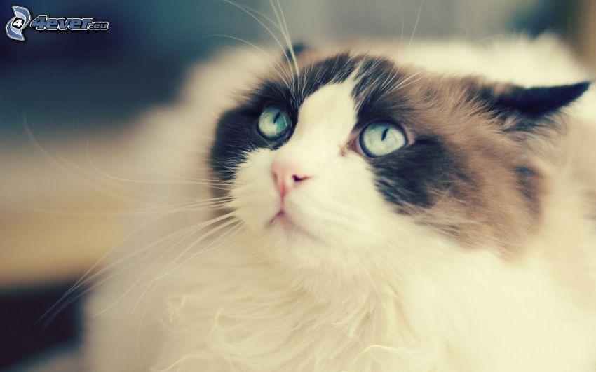 Gesicht der Katze