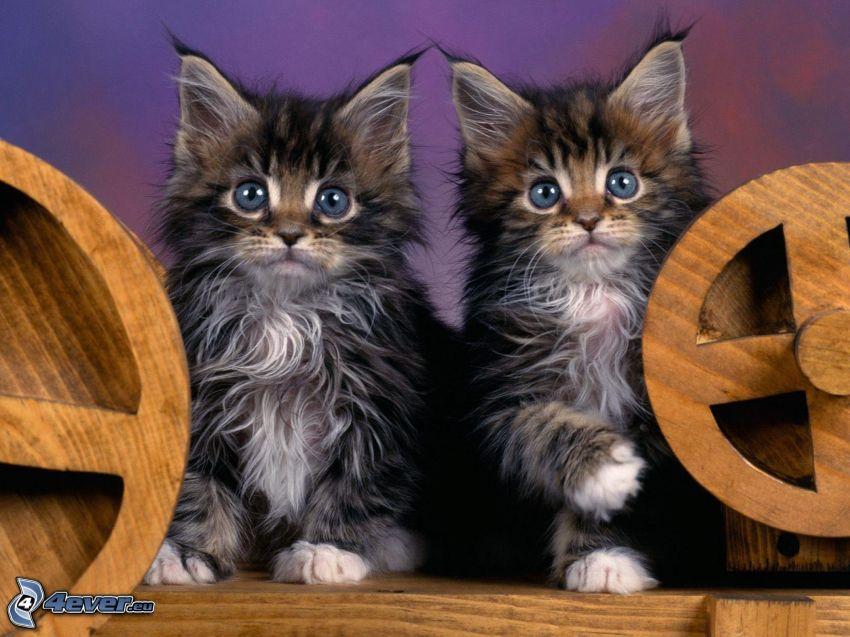 graue Kätzchen, Blick