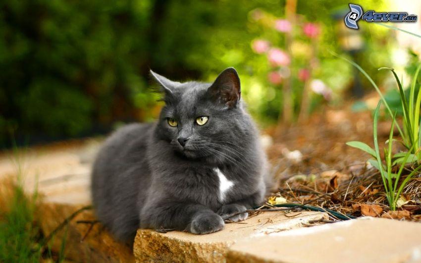 graue Katze, Blick