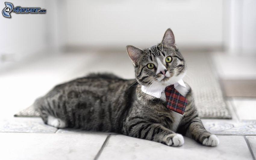 graue Katze, Krawatte, Gentleman