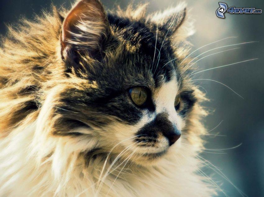 haarige Katze