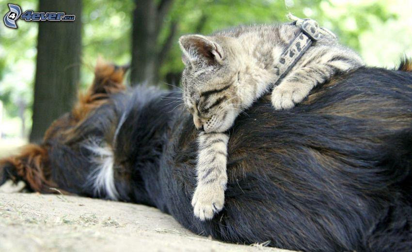 Hund und Katze, schlafende Katze, schlafender Hund