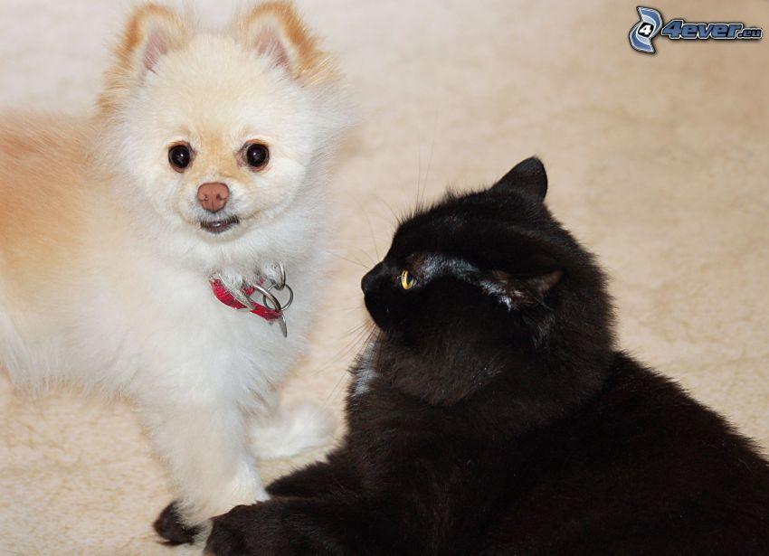 Hund und Katze, schwarze Katze