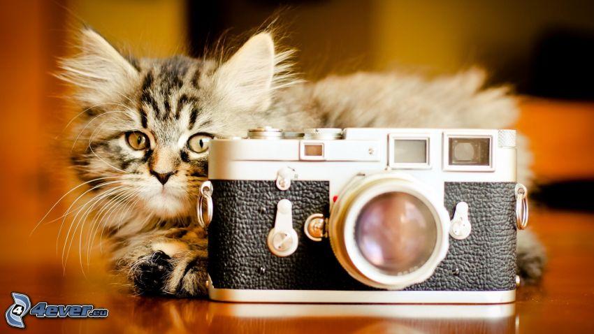Kamera, braune Kätzchen