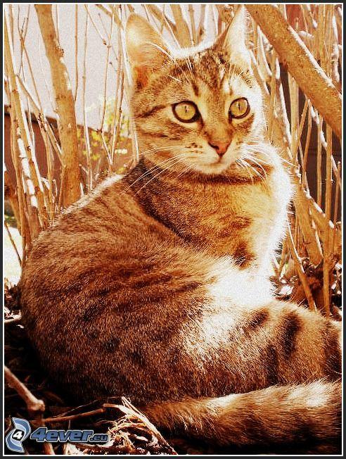 Kater, Katze