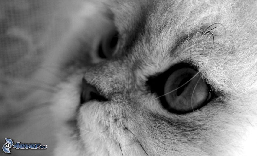 Kätzchen, Blick