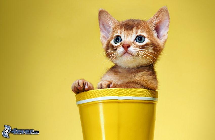 Kätzchen, Blumentopf