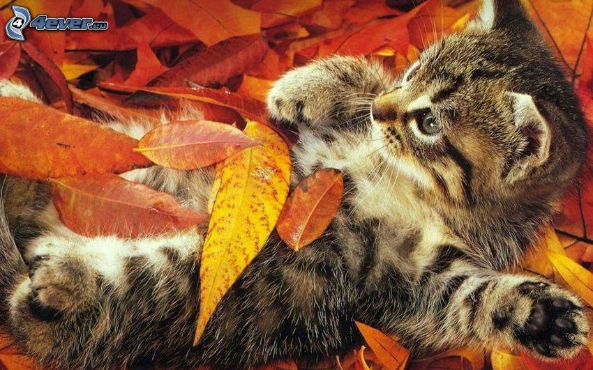 Kätzchen, bunte Blätter