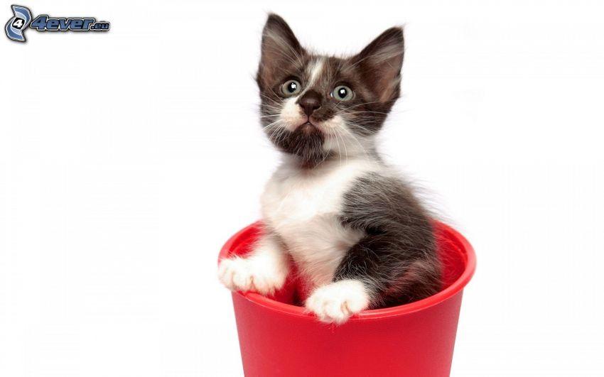 Kätzchen, Eimer