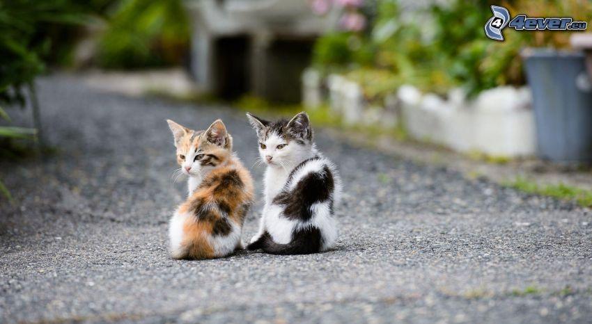 Kätzchen, gefleckt Kätzchen