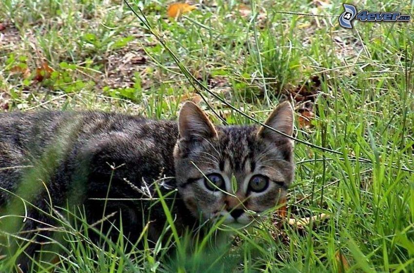 Kätzchen, Gras