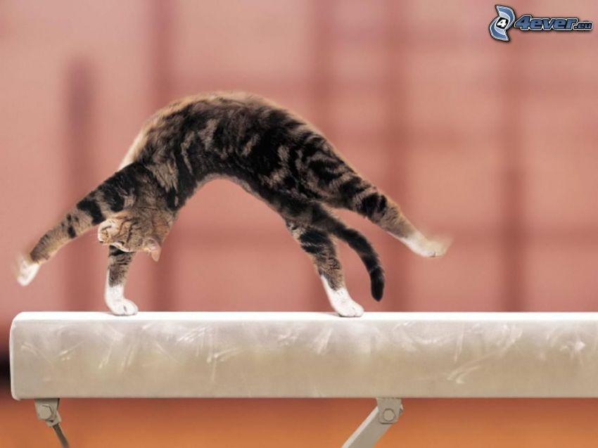 Kätzchen, Gymnastik