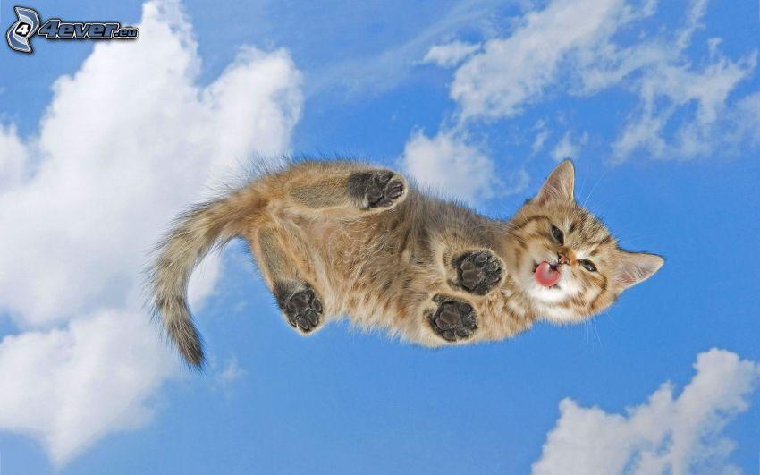 Kätzchen, hängende Zunge, Himmel