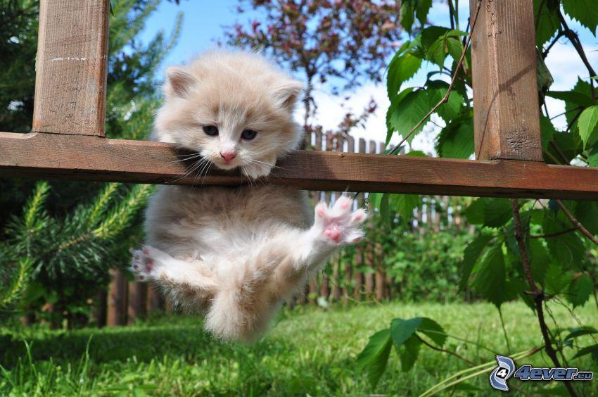 Kätzchen, Holzzaun