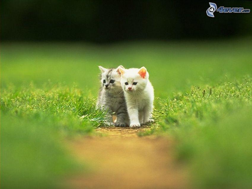 Kätzchen, Kätzchen auf der Wiese