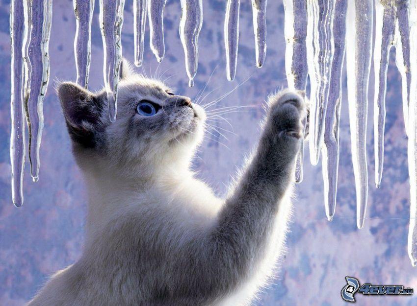 Kätzchen, Pfote, Eiszapfen
