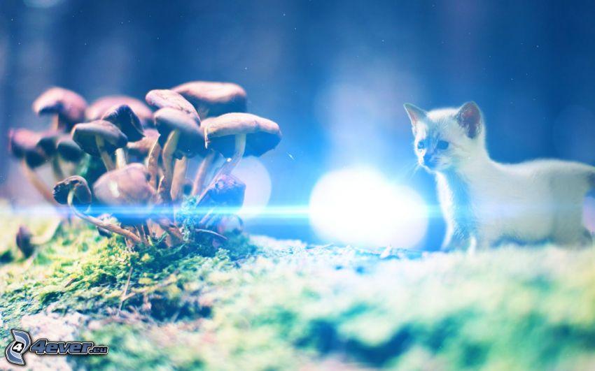 Kätzchen, Pilze