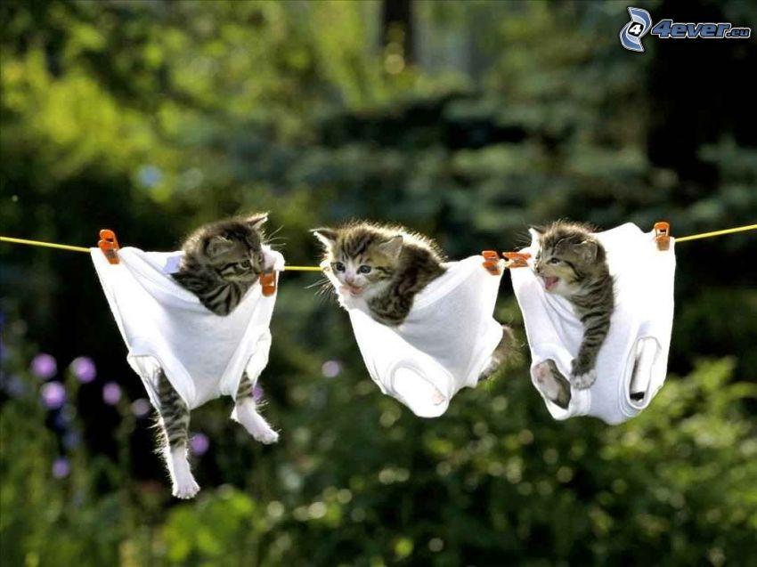 Kätzchen, Schnur