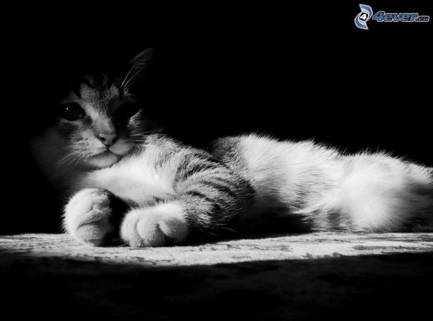 Kätzchen, schwarzweiß