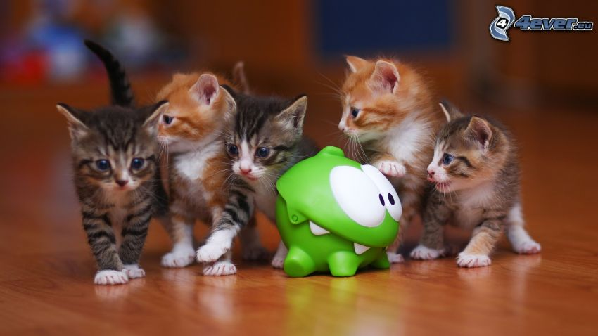 Kätzchen, Spielzeug