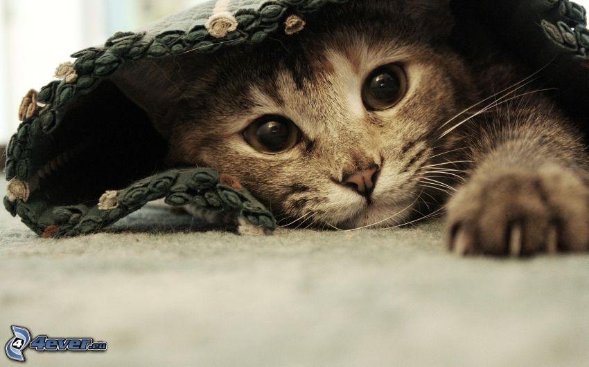 Kätzchen, Teppich